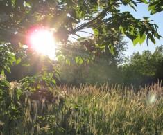 setting sun near Rountree Branch, photo by quirkyjazz aka Jill