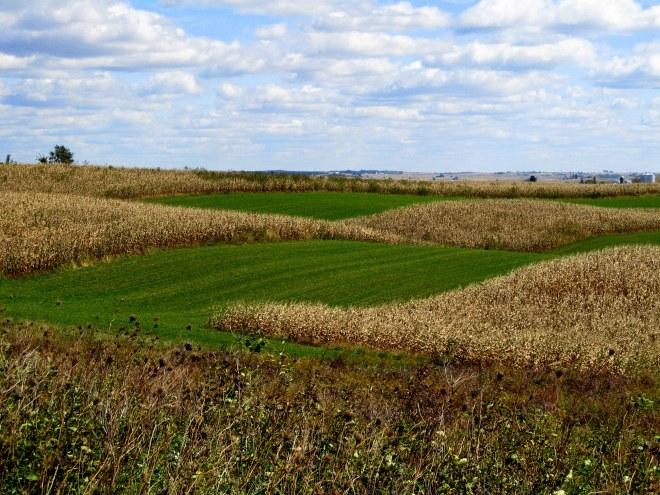 famer's fields