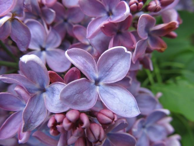 Olbrich Gardens, image by TTQ CC