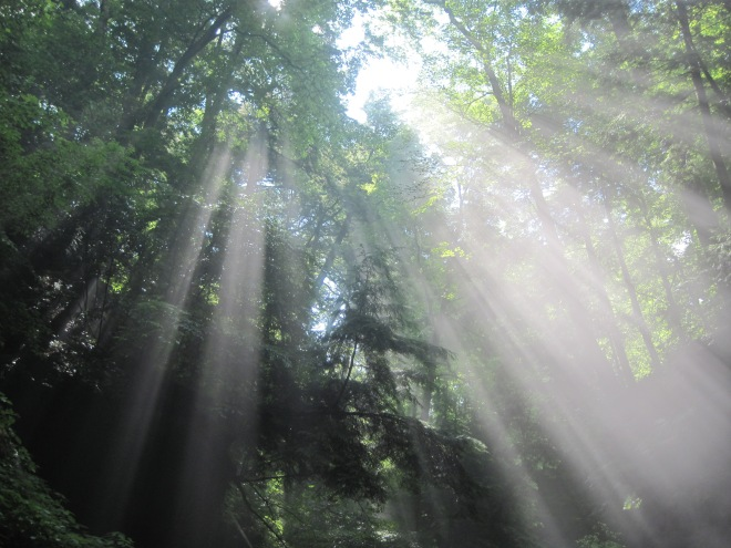 God never changes. Magical mist and morning sunbeams at Turkey Run SP on Trail 3; photo by quirkyjazz, aka Jill
