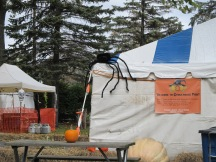 Spider Invasion! (at a local park -- Pumpkin Festival tent)