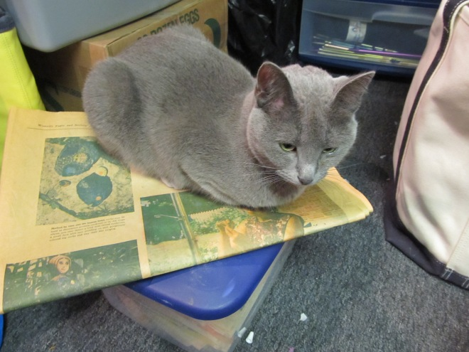 Cats can't resist sitting on newspapers.
