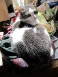 Zuki basking in the sun.