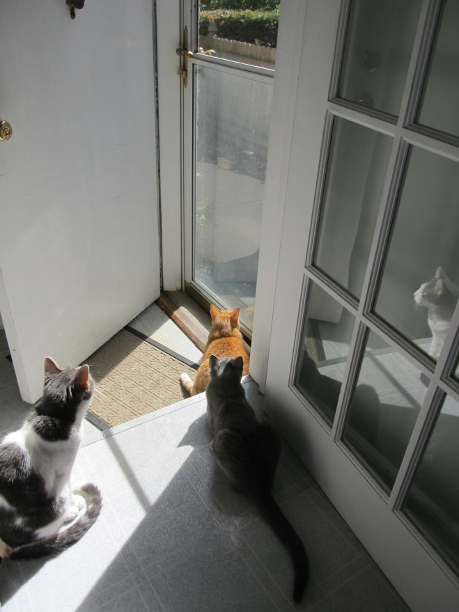 All THREE cats!  They very rarely get this close to each other.  If you look very carefully, you will see a small bird perched on the fence outside the door.