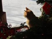 Zella watching snow. 2012