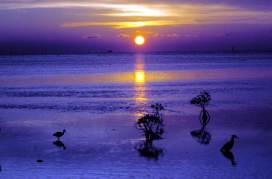 Sunrise on the flats: Key West, Florida. via Flickr CC