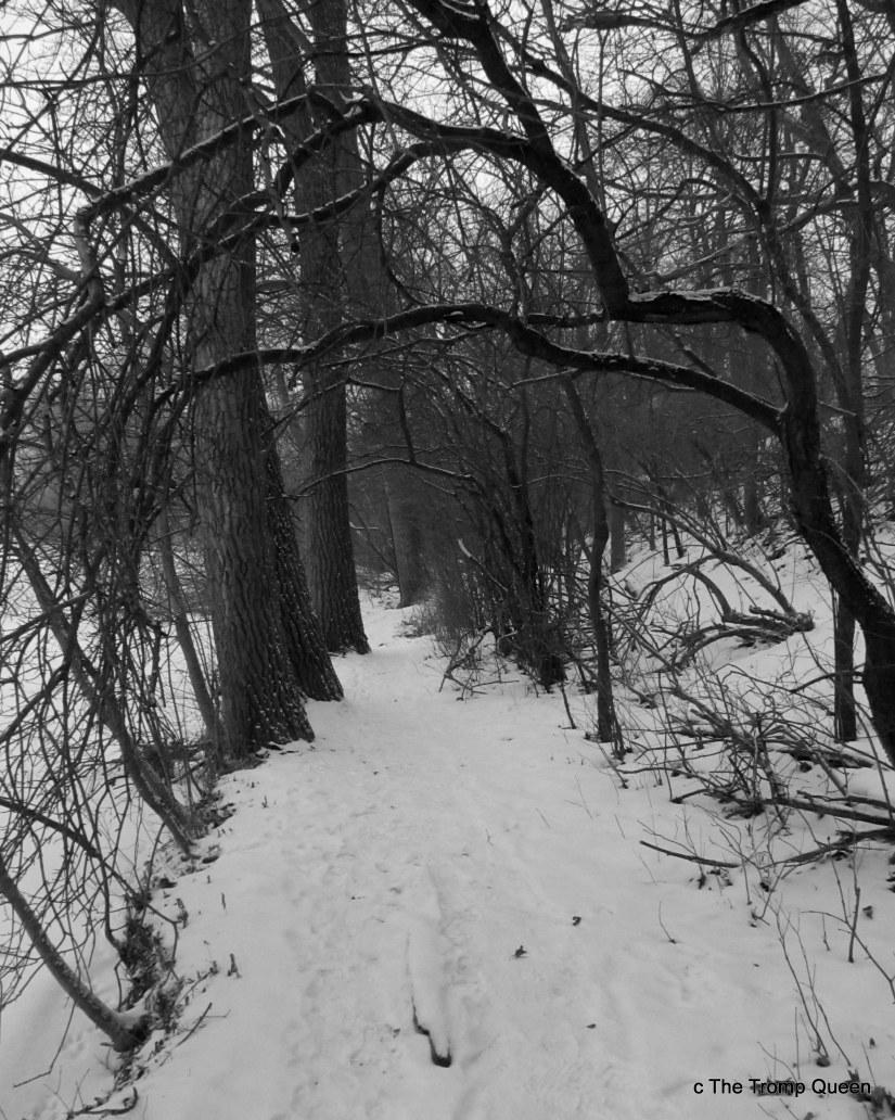 Into the WoodsPhilosophy