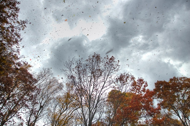 Wind sweeping fall leaves across the sky. Image by morganglines via Flickr CC