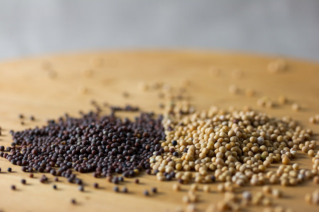 Black and White mustard seeds: Image by Mattie Hagedorn via Flickr CC license.