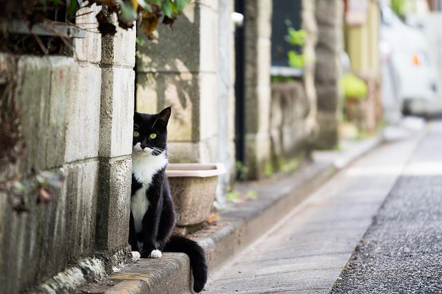Kodaira cat image by Takuya Goro via Flickr CC.