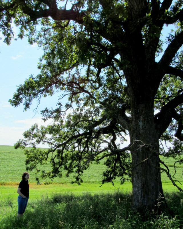 that tree2