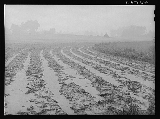rain soaked field