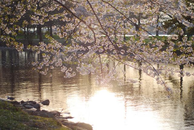 Image by Mimi Phan via Flickr CC, Cherry Bomb